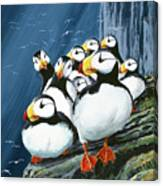 Horned Puffins At Rest Canvas Print