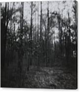 Horror In The Woods Canvas Print