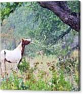 Horse 018 Canvas Print