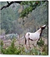 Horse 019 Canvas Print