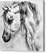 Arabian Horse 1 By Diana Van Canvas Print