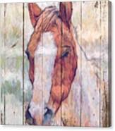 Horse 2 Canvas Print