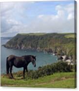 Horse Along Coastal Path Cornwall Canvas Print