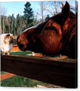 Horse And Cat Nuzzle Canvas Print
