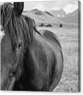 Horse And Sawtooth Mountains Canvas Print