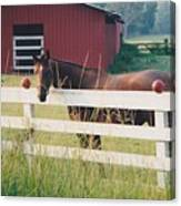 Horse And The Barn Canvas Print