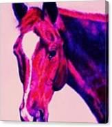 Horse Art Horse Portrait Maduro Deep Pink Canvas Print