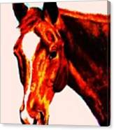 Horse Art Horse Portrait Maduro Red With Yellow Highlights Canvas Print