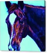 Horse Art Horse Portrait Maduro Striking Purple Canvas Print