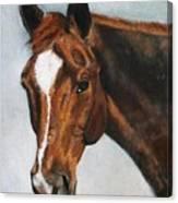 Horse Art Portrait Of Horse Maduro Canvas Print
