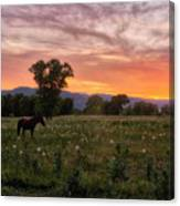 Horse At Sunset Canvas Print