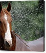 Horse Bath I Canvas Print
