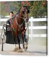Horse Carriage Racing In Delmarva Canvas Print