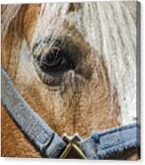 Horse Close Up Canvas Print