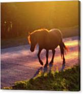 Horse Crossing The Road At Sunset Canvas Print