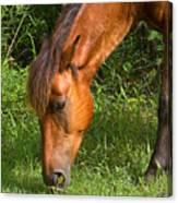 Horse Cuisine  Canvas Print
