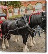 Horse Dray Canvas Print