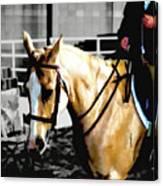 Horse Equus Ferus Caballus V2 Canvas Print