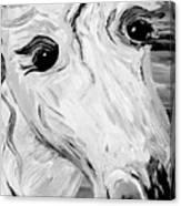 Horse Eyes Canvas Print
