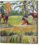 Horse Farm In Georgia Canvas Print