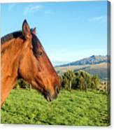 Horse Head Closeup Canvas Print