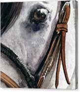Horse Head Canvas Print