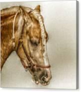 Horse Head Portrait Canvas Print
