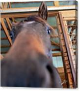 Horse Hello Canvas Print