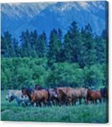 Horse Herd Canvas Print