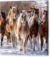 Horse Herd In Snow Canvas Print