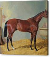 Horse In A Stable Canvas Print