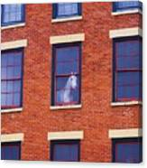 Horse In An Upstairs Window Canvas Print