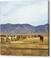 Horse In Eastern Sierras Canvas Print