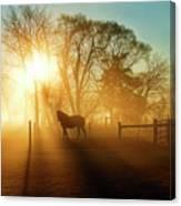 Horse In The Fog At Dawn Canvas Print