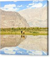 Horse On Lake Canvas Print
