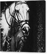 Horse Painting  Jumper No Faults Black And White Canvas Print