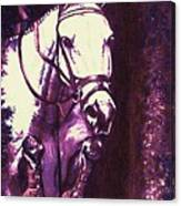 Horse Painting Jumper No Faults Purple Canvas Print