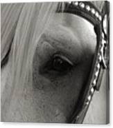 Horse Patience Canvas Print