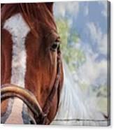 Horse Portrait Closeup Canvas Print