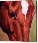 Horse Portrait Horse Head Red Close Up Canvas Print