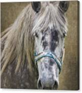 Horse Portrait I Canvas Print