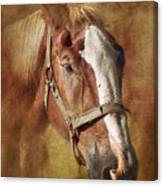 Horse Portrait II Canvas Print