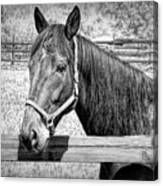 Horse Portrait In Black And White Canvas Print