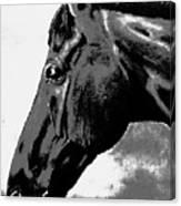 horse portrait PRINCETON black and white Canvas Print