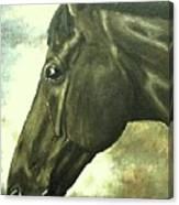 horse portrait PRINCETON bright light Canvas Print
