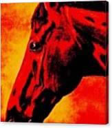 horse portrait PRINCETON sunset Canvas Print