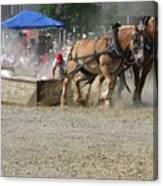 Horse Pull - Team A Canvas Print