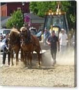 Horse Pull 2009 Canvas Print