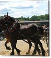 Horse Pull B Canvas Print