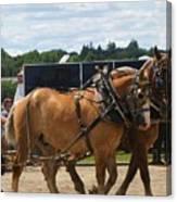 Horse Pull I Canvas Print